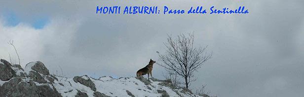 Monti Alburni: Passo della Sentinella - domenica 8 gennaio 2017