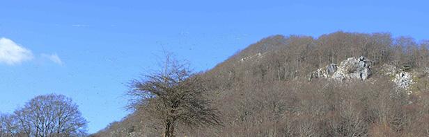 Monte Spina Dell'Ausino - monti alburni orientali - lunedi 1 marzo 2021