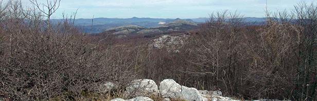 Monti Alburni Orientali: da Casino Sierro A Monte Piazza Ceraso e Monte Spina Dell'Ausino 6 Febbraio 2016
